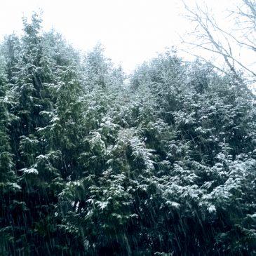 Snowbound Pondering
